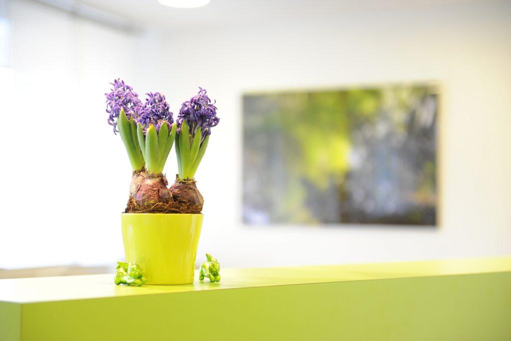Praxisimpressionen – Blumen
